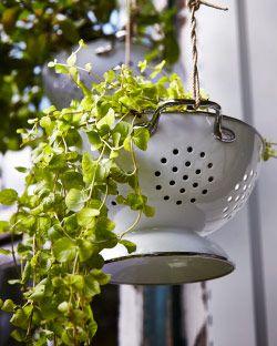 Al contar con asas para colgarlo y con agujeros para que salga el agua, el escurridor GEMAK resulta también ideal para colocar plantas.