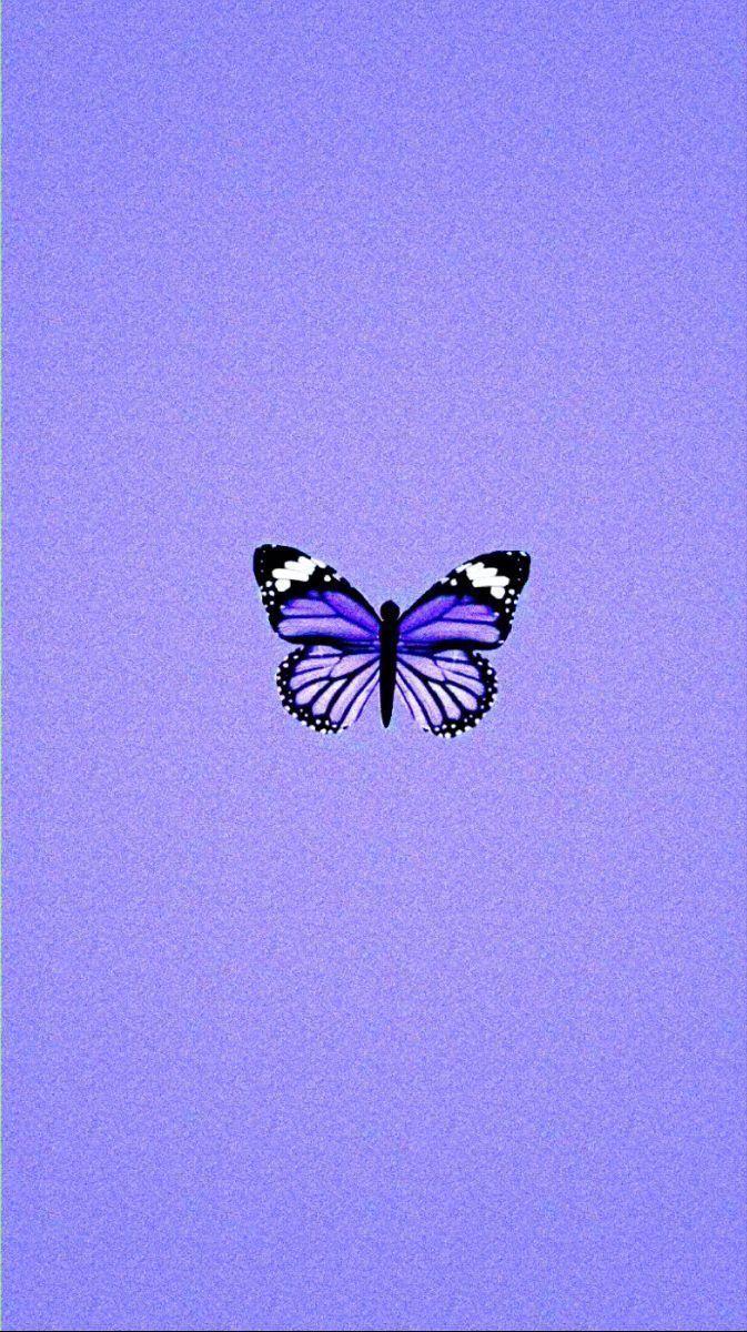 Iphone Wallpaper Glitter Iphone Wallpaper In 2020 Butterfly Wallpaper Iphone Purple Aesthetic Purple Wallpaper Iphone
