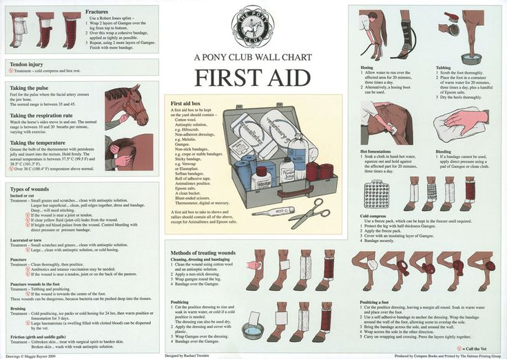 Horse First Aid Wall Chart