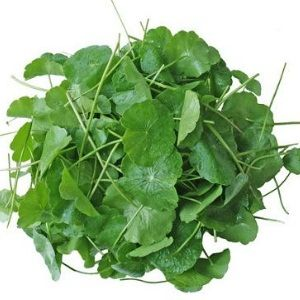 Gotu Kola Benefits. I use it for my veins, acne prone skin and lymph!!! I found very affordable option. Check http://www.skinoholist.com/lymph_acne_pimples/