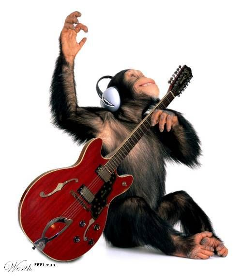 funny chimps pictures (17)