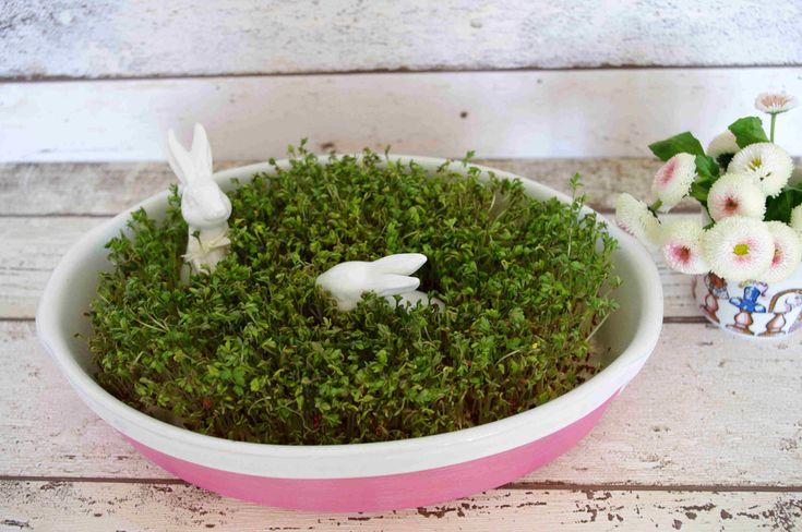 Porzellanschale mit Dekohäschen und Kresse für Ostern. Mehr dazu auf idimin.berlin #happyeaster #Froheostern #ostern #easter #Kresse #cress #porcelain #DIY #Porzellan #bunny #bunnies #Hase #Kaninchen