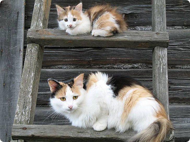chatte et chaton ecaille de tortue sur echelle