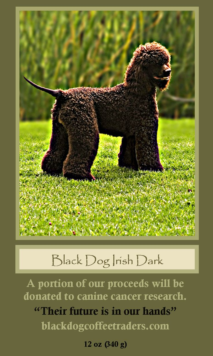 Black Dog Coffee Traders - Black Dog Irish Dark- 12 oz bag , $11.99 (http://stores.blackdogcoffeetraders.com/black-dog-irish-dark-12-oz-bag/)