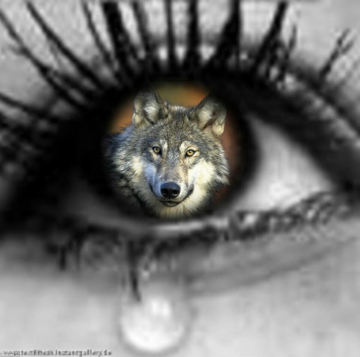 A tear for wolves