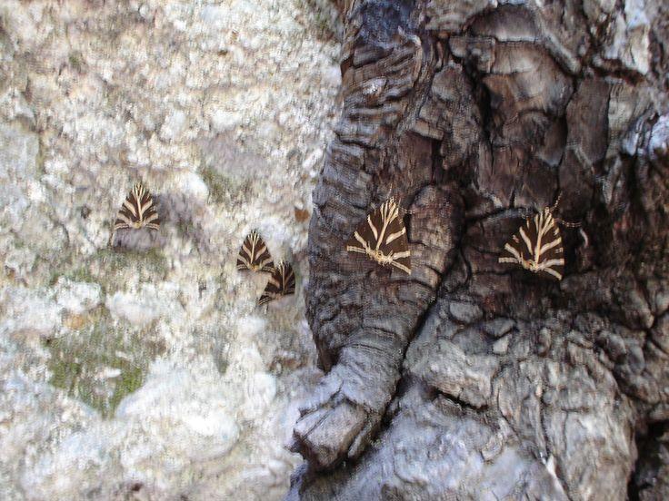 The Butterflies Of Rhodes