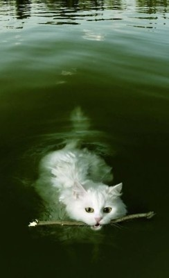 A cat swimming w/ a stick. What the?! Aqua kitty. Soft kitty purr purr purr