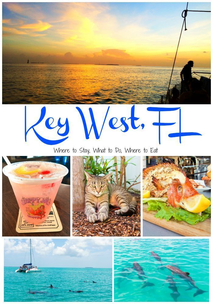 17 best images about naples marco fl day trips on for Best florida fish to eat