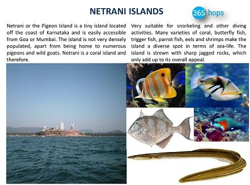 NETRANI ISLANDS >> #Netrani or the Pigeon #Island is a tiny island located off the coast of #Karnataka and is easily accessible from #Goa or #Mumbai. The island is not very densely populated, apart from being home to numerous pigeons and wild goats. Netrani is a coral island and therefore, very suitable for snorkeling and other diving activities. #NetraniIsland #365Hops #India
