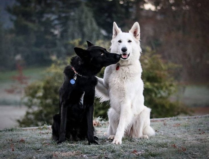 """Two Dogs Pose for the Camera in the Cutest """"Wedding"""" Photos You'll Ever See - BlazePress"""