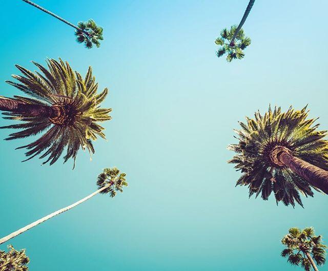 """Tam olarak """"Bir an önce tatile çıkmalıyım"""" havası🌴🏝 #milliyet #milliyetemlak #gökyüzü #tatil #holiday #summer #yaz #ağaçlar #trees #photooftheday #palmtrees #beach #sahil #fromwhereistand"""