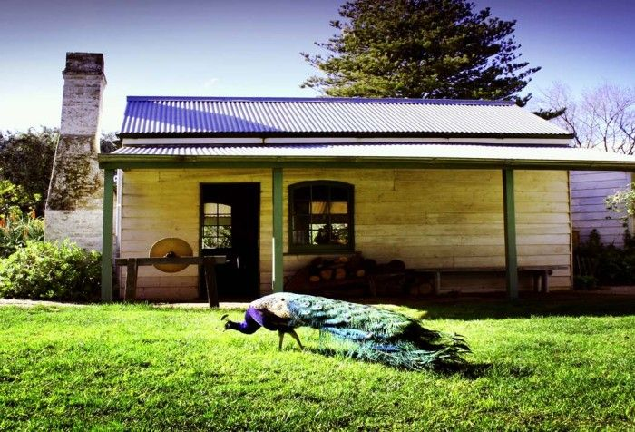 Churchill Island Heritage Farm | Phillip Island