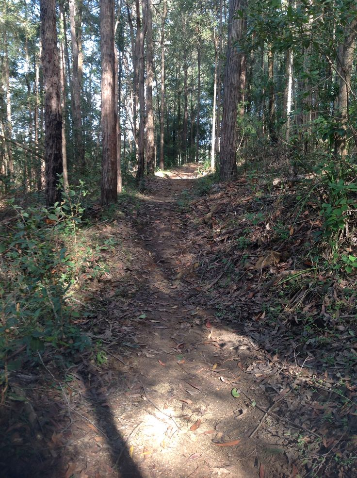 Walking trails at Bago vineyards , start here and end up in Bago Bluff NP