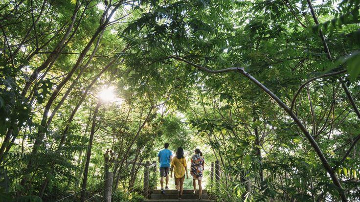 Can Urban Trees Clean up the air?