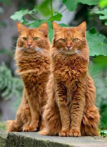 Firestar and his father