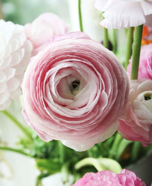 Ranunculus. They're pretty in any color.  (reminds me of a cross between a Peony and a Rose).