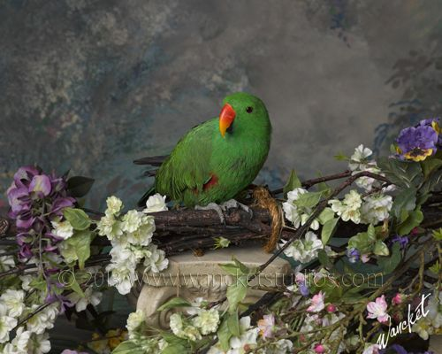 Zazu the parrot. Bird photos, Pet portraits, Pet photos, Bird portraits. Professional Photography. Parrots.