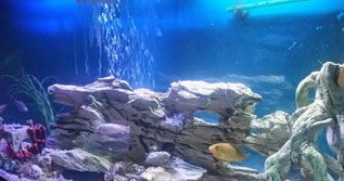 RENTALS FROM RENT AQUARIUM We take care of everything, from the installation process, the livestock, the food for the fish and the maintenance. http://rentaquarium.co.uk/ #RentAquarium, #RentanAquarium, #AquariumLondon, #LondonAquarium, #London