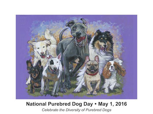 """National Purebred Dog Day's 2016 poster, """"Here They Come"""" by Nadi Spencer is certain to become a collectable for its unique position asNPDD's very first poster. Its appeal to a wide spectrum of purebred dog affectionados, frompet owners and fanciers, to professionals and volunteers within the dog world make it a piece of art anyone would want on their wall.  """"Here They Come"""" was chosen by juror, Dan Sayers, in a highly competitive contest in which the theme was """"diversity."""" The artist…"""