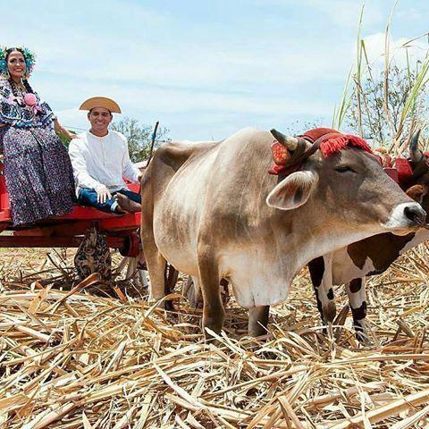 @Regrann from @chitre_progresa -  @Regrann from @victorlijin -  Ya vamos pal pueblo @jisethcordoba en nuestra carreta,  para gozar juntos del @desfiledelasmilpolleras este sábado #Amoushis #Pollera #Panama #culture #Cultura #folklore #Tradicion #sombrero #Cutarras #LasTablas #Guararé #LosSantos #Carreta #Fiesta #Tembleques #PrendasTipicas #LifeStyle #tbt - #regrann - #regrann