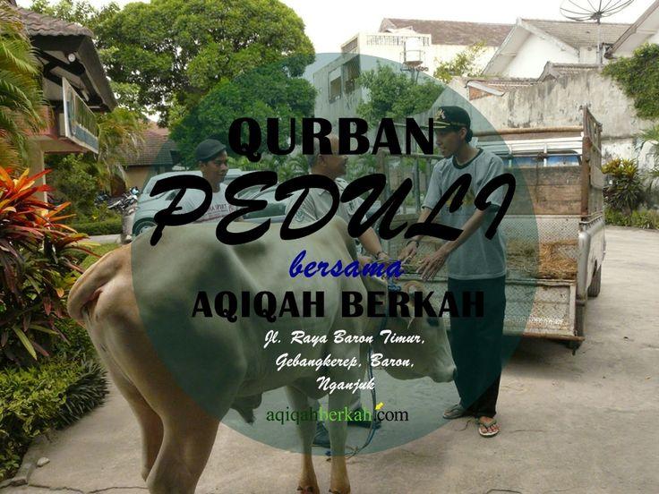 Qurban Peduli