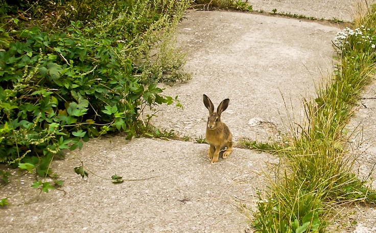 run rabbit run..or not?