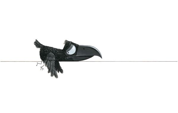 Crow by Leo Timmers, via Behance