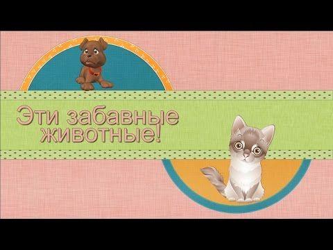 Детское видео для детей. Эти смешные животные. Прикольное видео. Улыбнис...
