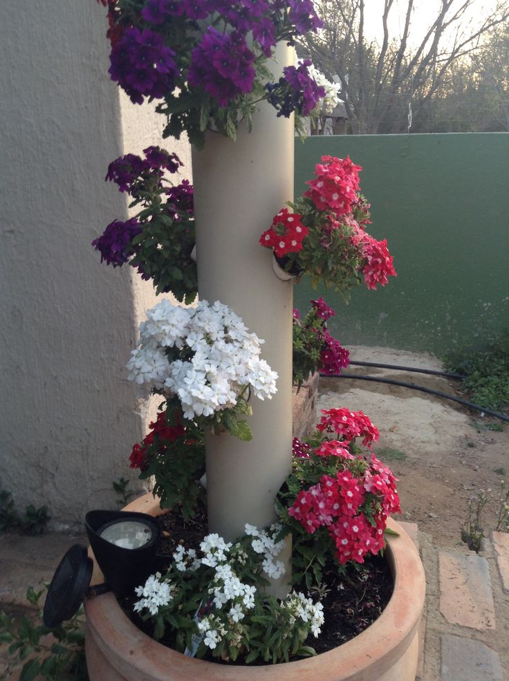 Garden al poll. The verbena's look great and the other residence agree.