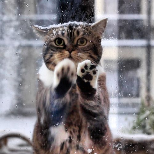 "'Mel Cat'............                        ""Seriously Dude, it's freezing out here!  Let me in!""       ..........  (via Skye)"