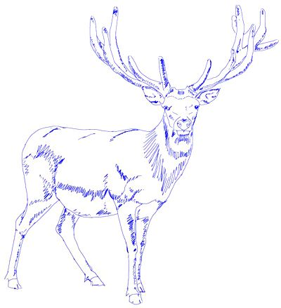 13 best drawing images on pinterest drawing ideas for How to draw a deer step by step