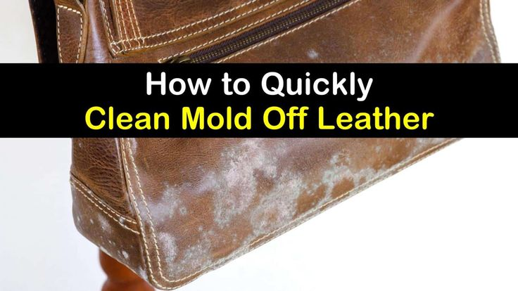 4 simple ways to clean mold off leather in 2020 with