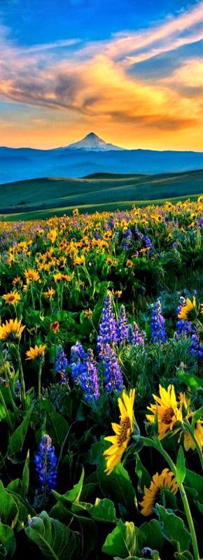 Sunset at Columbia Hills State Park, Washington