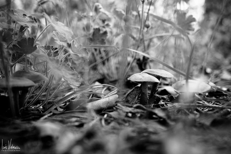 https://flic.kr/p/GdFbfo | Fungi | www.inesvalencia.com