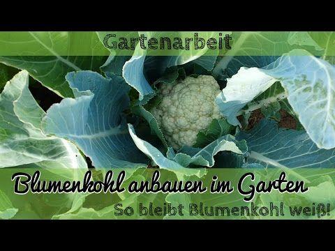 grüneliebe - Gartenblog & Foodblog - Alles rund um den Nutzgarten, Naschgarten, DIY, Essen & Trinken, Tier & Natur
