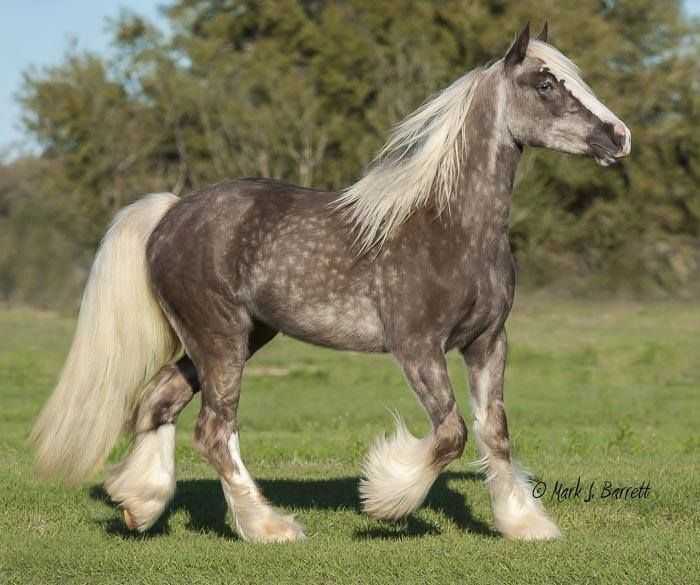 Paint Ponies For Sale In Missouri