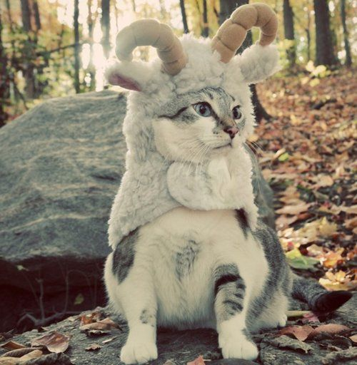 Mountain Goat Cat is not amused by your antics.