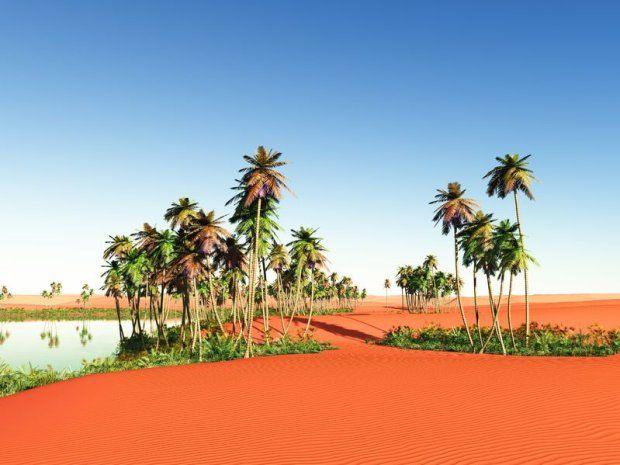 Dzisiaj roślinność na Saharze spotkamy w dolinach rzek i oazach.