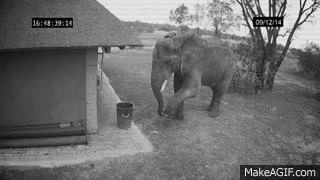 un éléphant jette des détritus à la poubelle [video] - http://www.2tout2rien.fr/un-elephant-jette-des-detritus-a-la-poubelle-video/