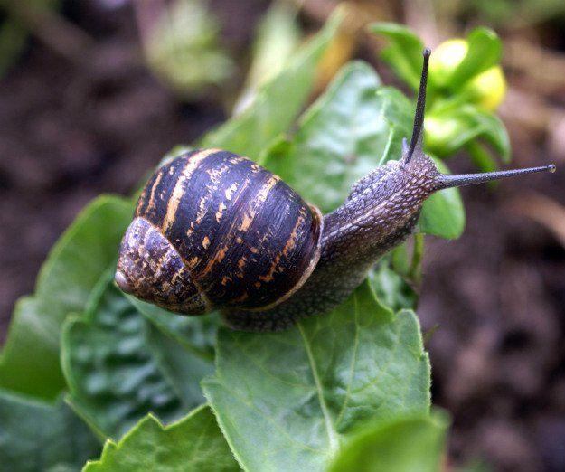 498 Best Gardening Ideas Images On Pinterest