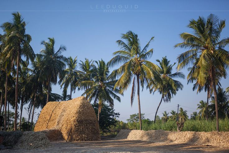 Sugar cane straw pilled high in rural village on the outskirts of Mysuru, India.