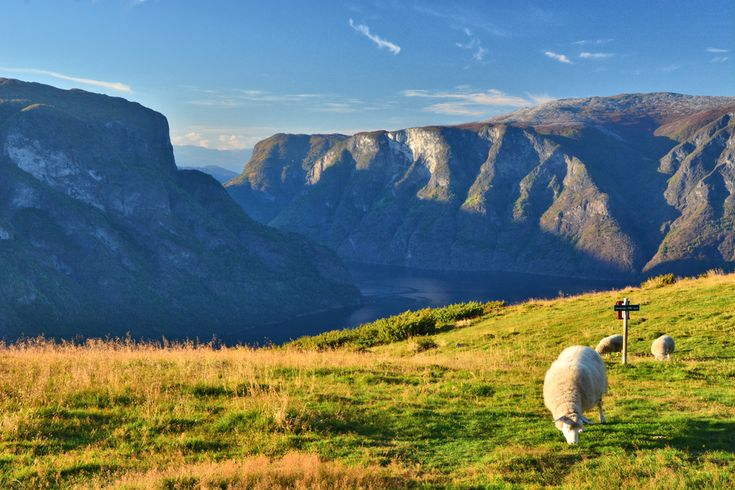 Summer grazing high in the mountains