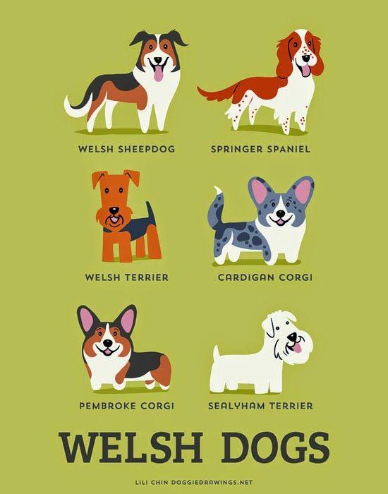 Welsh dogs (c) Lili Chin @ doggiedrawings.net