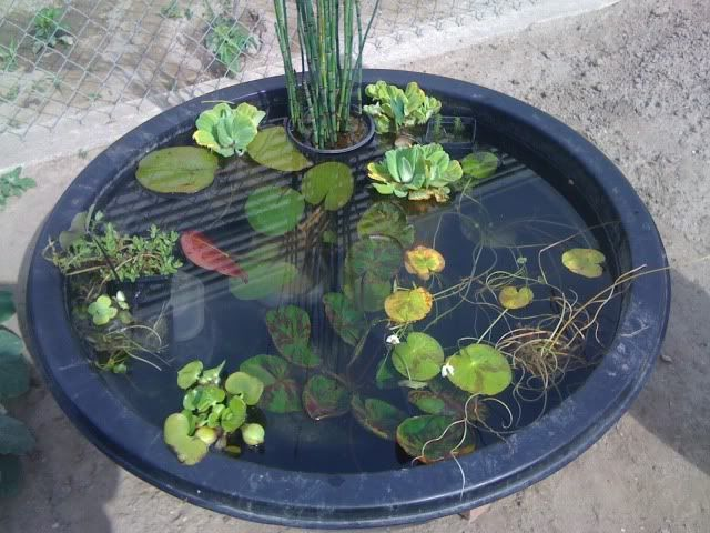 Container pond gardening water features pinterest ponds for Outdoor aquarium pond planter
