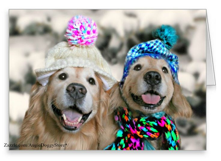 137 best Golden Retriever Greeting Cards & Postcards images on ...