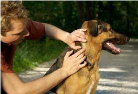 Le zecche ed il cane, cosa fare... - Cerco cane - Annunci, notizie e informazioni a quattro zampe