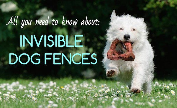 Invisible Dog Fence 101 Guide: Overview, Reviews, & Ratings