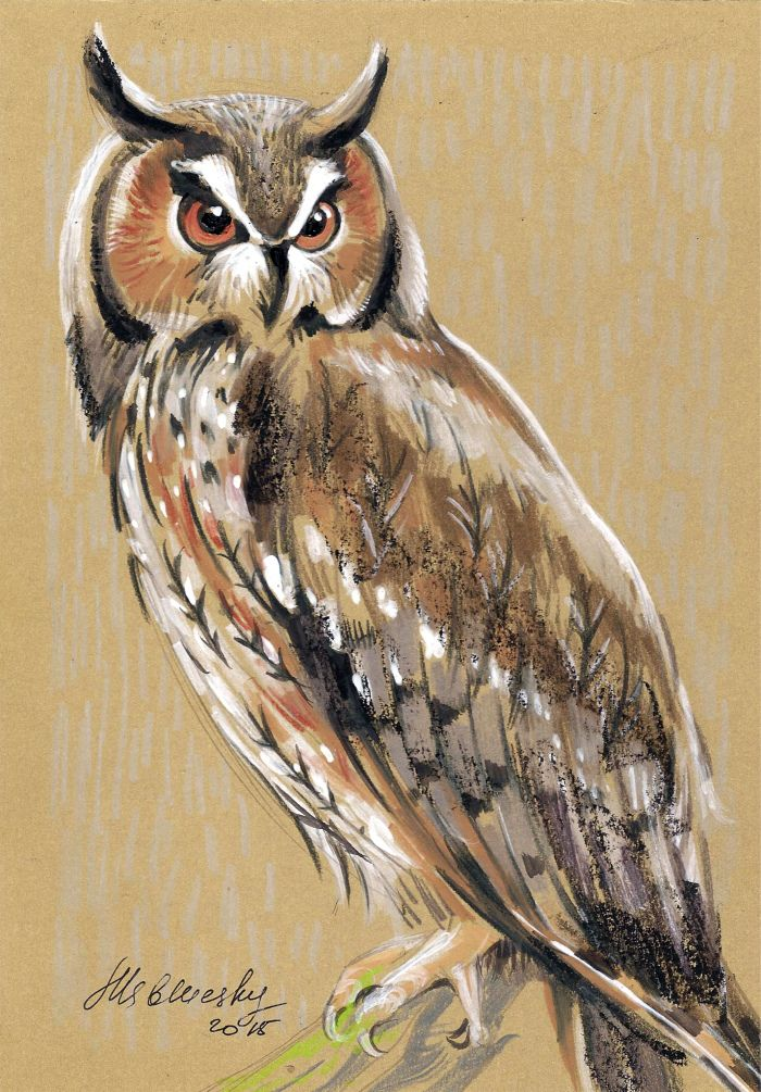 photo owl6_.jpg