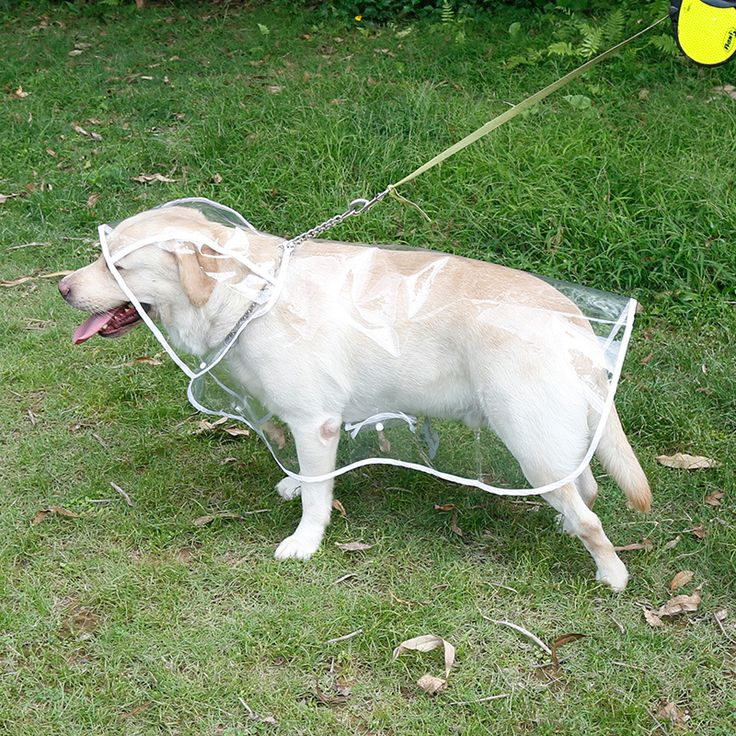 Grandes-Impermeables-para-Perros-Mascotas-Perros-Ropa-Impermeable-Capa-de-Lluvia-Con-Capucha-Transparente-Grande-Perros.jpg (800×800)