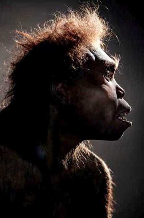 the evolution of homo erectus Introduction homo erectus is perhaps the most important 'transitional' form in  human evolution it looked very much like modern man except for a number of.